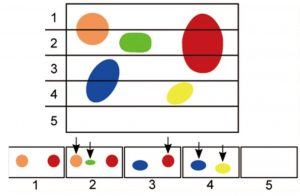 stereology solves the problem of object orientation affecting the amount of times it is counted